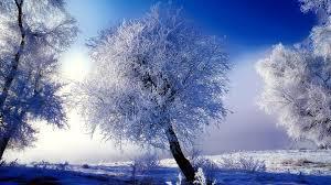 Christmas Scenes Free Downloads Christmas Scenery Free Download Hd Snowy Christmas Scene