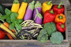 colorful vegetable garden harvest