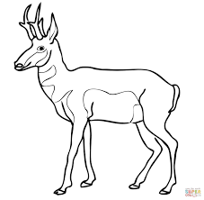 Small Picture Antelope Coloring Pages GetColoringPagescom