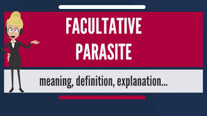Parasite synonyms, parasite pronunciation, parasite translation, english dictionary definition of parasite. What Is Facultative Parasite What Does Facultative Parasite Mean Facultative Parasite Meaning Youtube