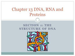 In the free section of the google ebookstore, you'll nd a ton of free books from a variety of genres. Chapter 8 From Dna To Proteins Day One What Is Dna Your Genetic Information Genes Dna Deoxyribonucleic Acid Dna Is An Example Of A Nucleic Acid Ppt Download