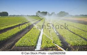 Watering Crops Irrigation At The Field