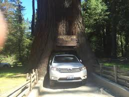 chandelier drive through tree our suv in the tree