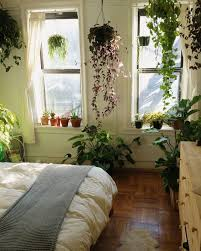 Small Picture House plants ideas