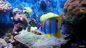 tropical aquarium wallpaper.  Aquarium HD Wallpaper Tropical Fish In Aquarium And Aquarium Wallpaper