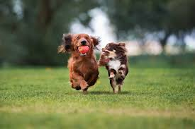 two dogs running side by side