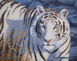 white tiger with blue eyes in snow.  Snow White Tiger With Blue Eyes In Snow  Photo25 And Tiger With Blue Eyes In Snow