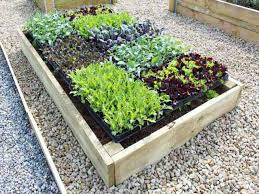 timber raised garden beds for growing vegetables