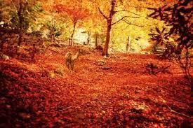 奥山 に もみじ 踏み分け 鳴く 鹿 の 声 聞く 時 ぞ 秋 は 悲しき