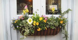 Best flowers box garden purple ideas #garden #flowers. 8 Tips To Make Your Window Box Flourish And 11 Ideas To Inspire You