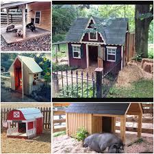 Pig Enclosure Design Building For The Outdoor Pig Pet Pig Education