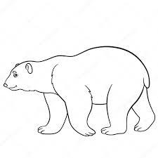 Disegni Di Orsi Polari Disegni Da Colorare Simpatico Orso Polare
