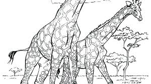 Giraffe Coloring Page Giraffe Color Page Baby Giraffe To Color