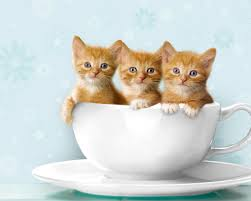 cat images photos 2016