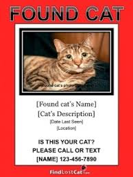 lost and found flyers lost cat flyer poster templates free downloads