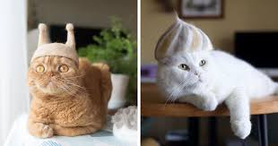 These Cats Have A Huge Collection Of <b>Hats Made</b> Out Of Their ...
