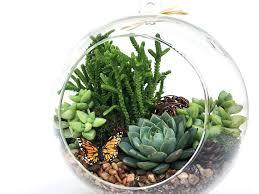 succulent terrarium diy kit woodsy6 inch regarding ideas decorations 2