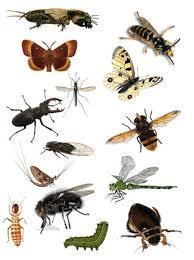 Насекомые и жуки для детей фото и видео Насекомые Природа  Насекомые