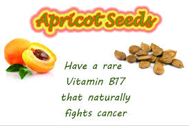 Image result for Vit B17