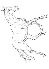 Small Picture Horse Coloring Pages 3 Coloring Pages Pinterest
