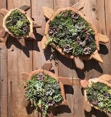 turtle vertical succulent arrangement