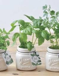 jar garden ceramic jar plant