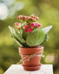 potted plant gifts what are good plants to give as gifts