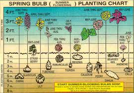 Small Picture Garden Design Garden Design with Bulb Growing Tips East Bay