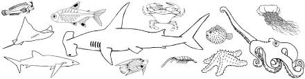 Small Picture A PDF of All the Following Ocean Animal Coloring Pages for