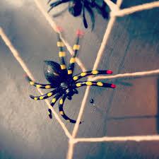 spider-web-square