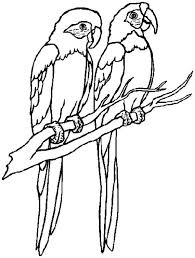 Small Picture coloring pages draw a parrot parrot drawing parrot coloring pages