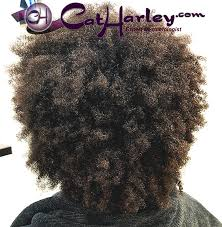 Natural Curl Pattern Delectable Cat Harley Beauty Blog News And Updates