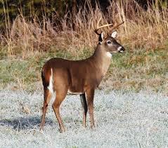 Deer Feeding Chart 2018 Ga Deer Shooting Over Bait Now Legal Throughout Georgia