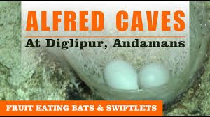 Image result for Alfred Caves diglipur