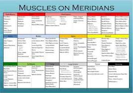 Kinesiology Muscle Chart Muscles On Meridians Chart