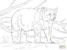 Realistic American Black Bear Coloring Page