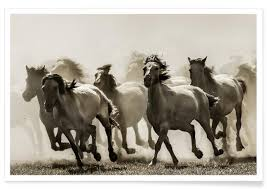Cheap Horse Posters Buy Horse Art Prints And Posters Online Juniqe Uk