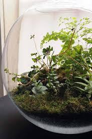 mini indoor gardening 13