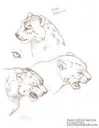 Sketches Animal Lindsay Cibos Art Blog Daily Animal Sketch Snow Leopards