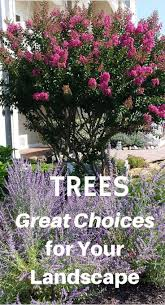 25+ gorgeous Best shade trees ideas on Pinterest   Borders for ...