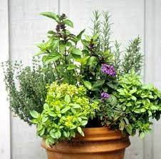 35 herb container gardens pots