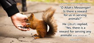 20 Islamic Quotes On Kindness To Animals