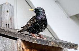 best bird deter how i get rid of