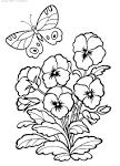 Раскраска цветка анютины глазки