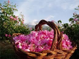 Картинки по запросу фото долина роз в петровке