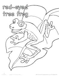 tree frog template red eyed tree frog coloring page red eyed tree frog coloring page