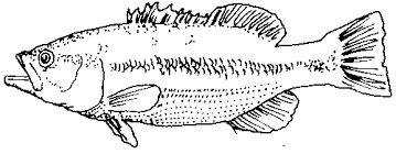 Small Picture Best Freshwater Fish Coloring Pages Ideas Coloring Page Design