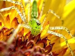 Insecticide Spider Killer Spray Repellent Traps Poison Bait Bag Worm
