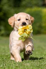47 best DIFFERENT BREEDS OF DOGS images on Pinterest