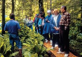 Photo of Instructional Rainforest Guided Walk